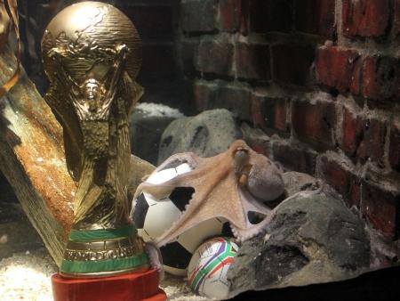 O polvo Paul ficou famoso por acertar todos os resultados da Alemanha além do campeão da Copa do Mundo; um troféu para ele é mais do que merecido
