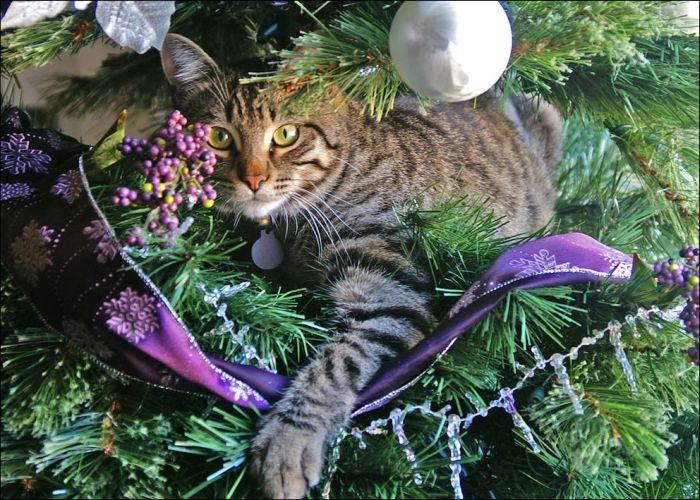 <p>Árvore de Natal e gatos: uma combinação caseira que pode ser bem perigosa. Os pequenos felinos parecem não resistir aos enfeites natalinos e não pensam duas vezes em ataca-los. Em fotos selecionadas pelo site internacional Acid Cow, gatinhos não dão trégua para o símbolo do Natal. Seus donos, é claro, não perderam a chance de flagrar as imagens inusitadas</p>