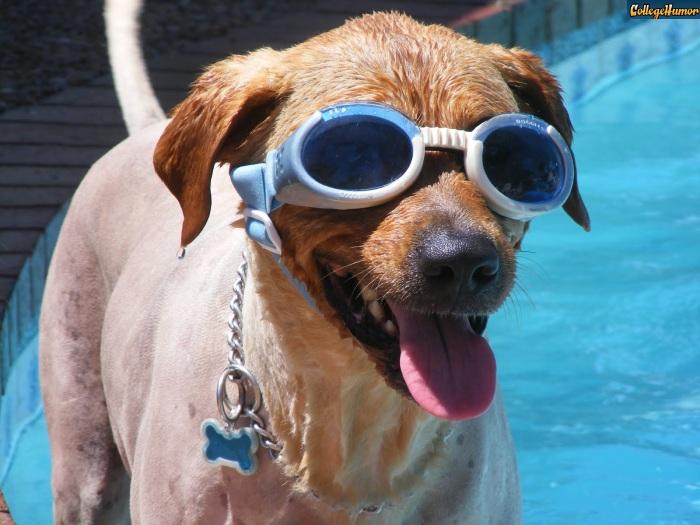 <p>Passar o dia inteiro na piscina, relaxando, bebendo alguma coisinha, comendo petiscos gostosos e aproveitando o sol. Esse é o sonho de muita gente que vive uma rotina estressante. Só que essa mordomia é só para quem pode. Os cachorros que você vai ver nessa galeria podem... e com muito estilo!</p>