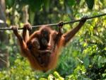 Conheça as dez mães mais amororosas do reino animal